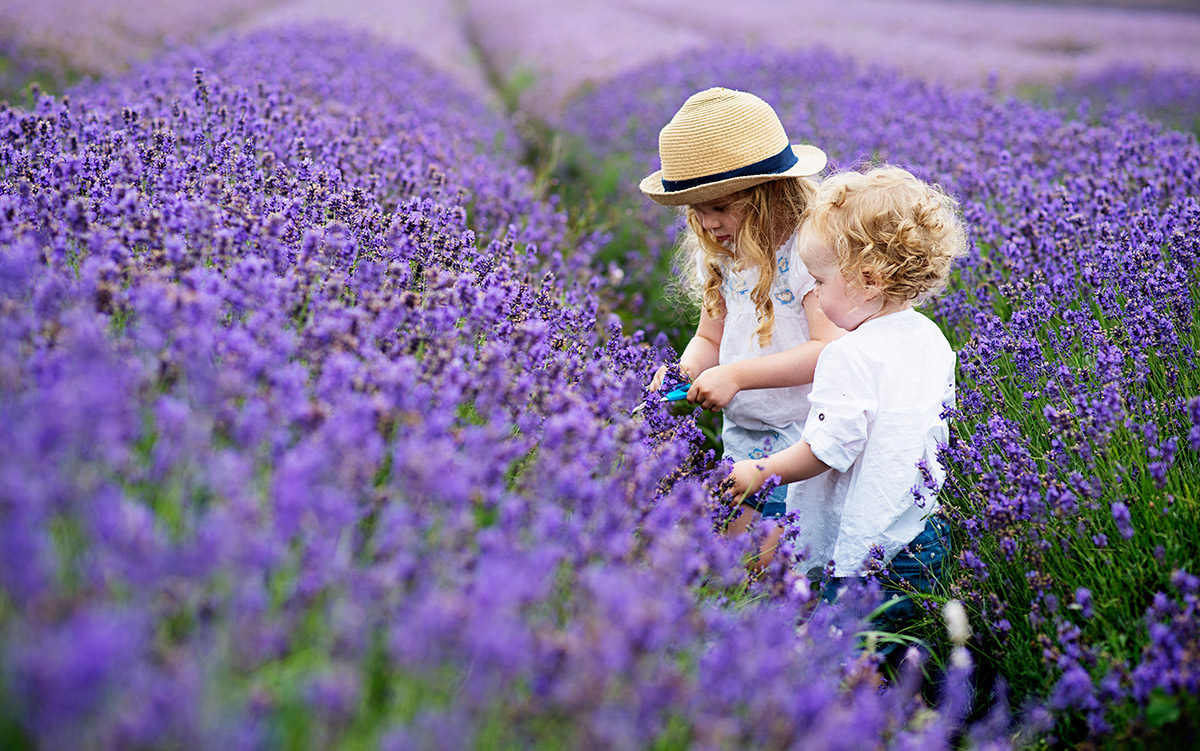 a-lavender-family-shoot-a
