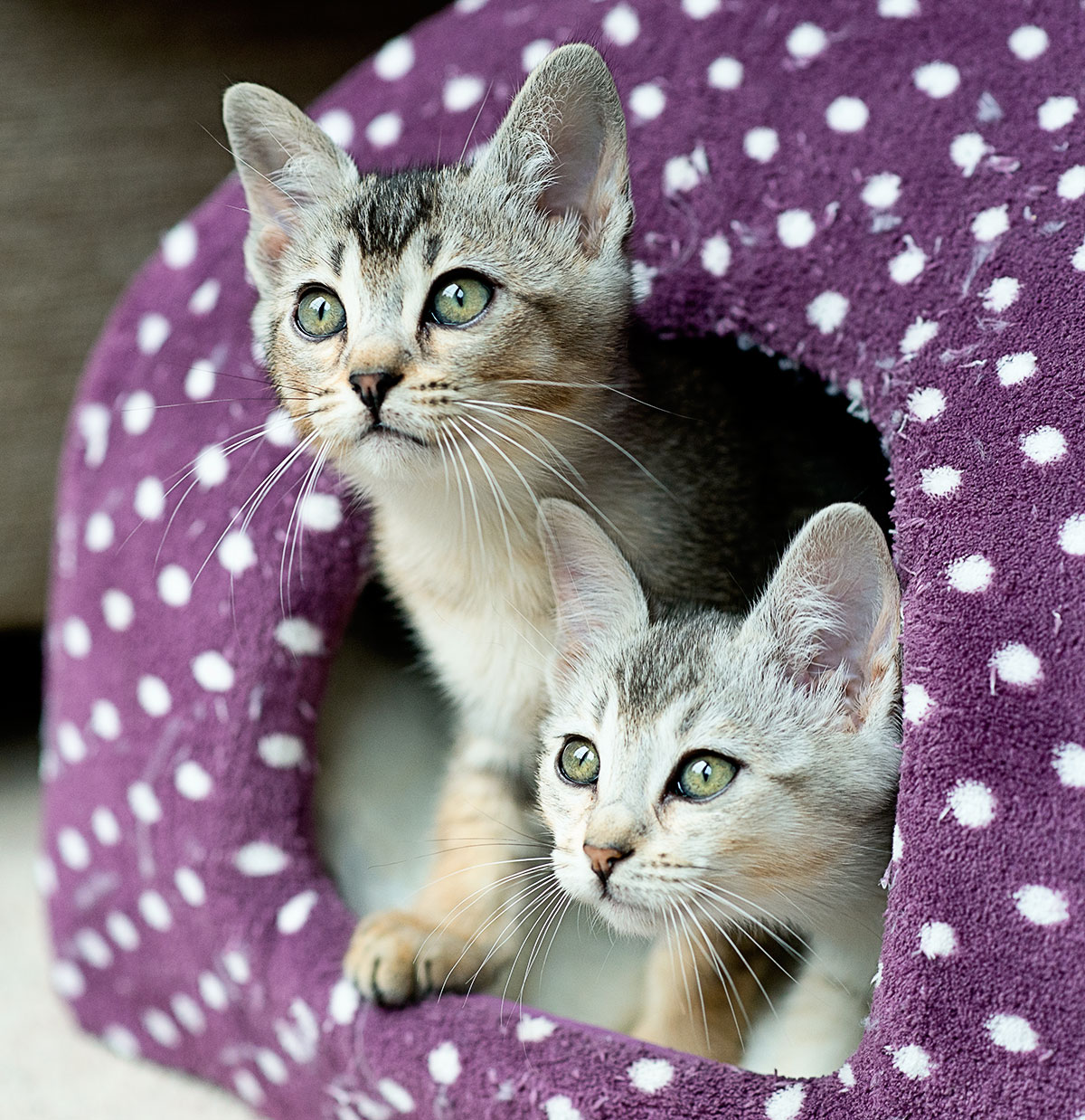 2_kittens