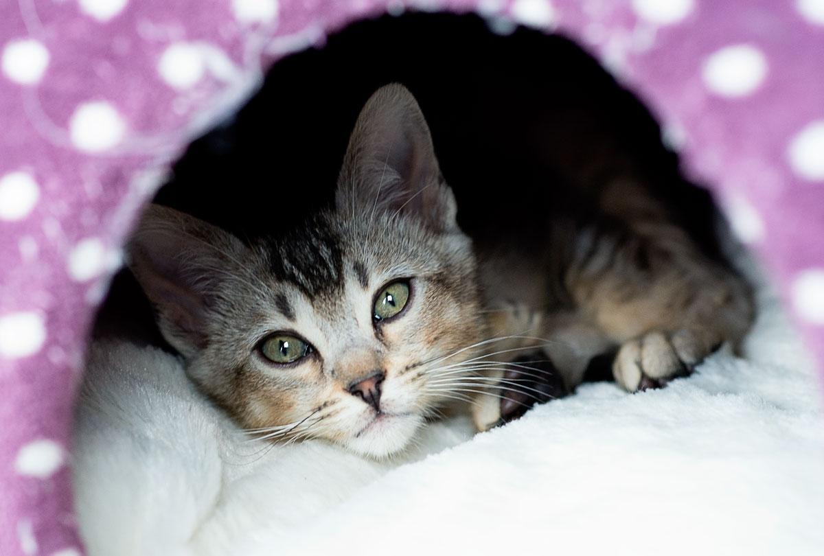 2 kittens a