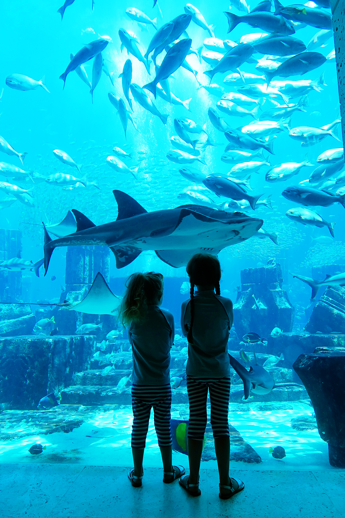 A Day at Atlantis, The Palm Dubai