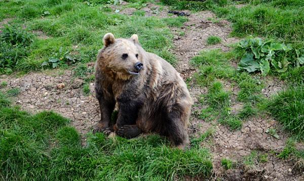 beargrrr