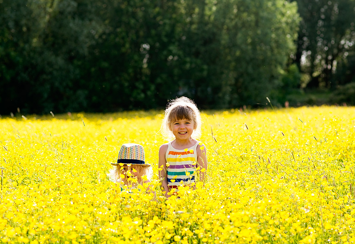 field of buttercups 11