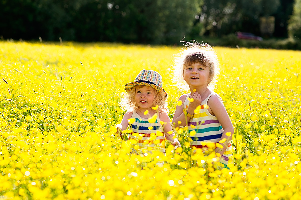 field of buttercups 8