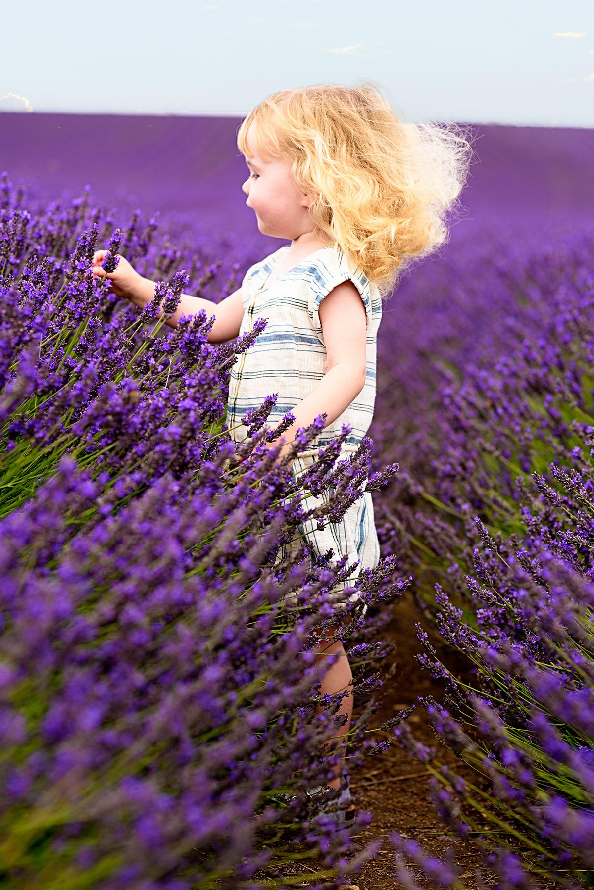 lavenderfields_15_d