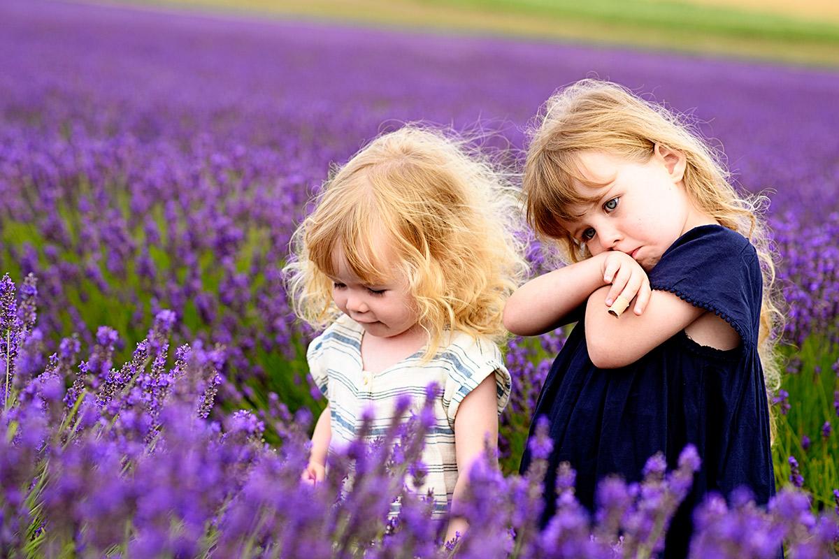 lavenderfields_15_f