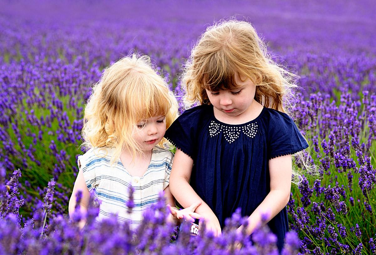 lavenderfields_15_r