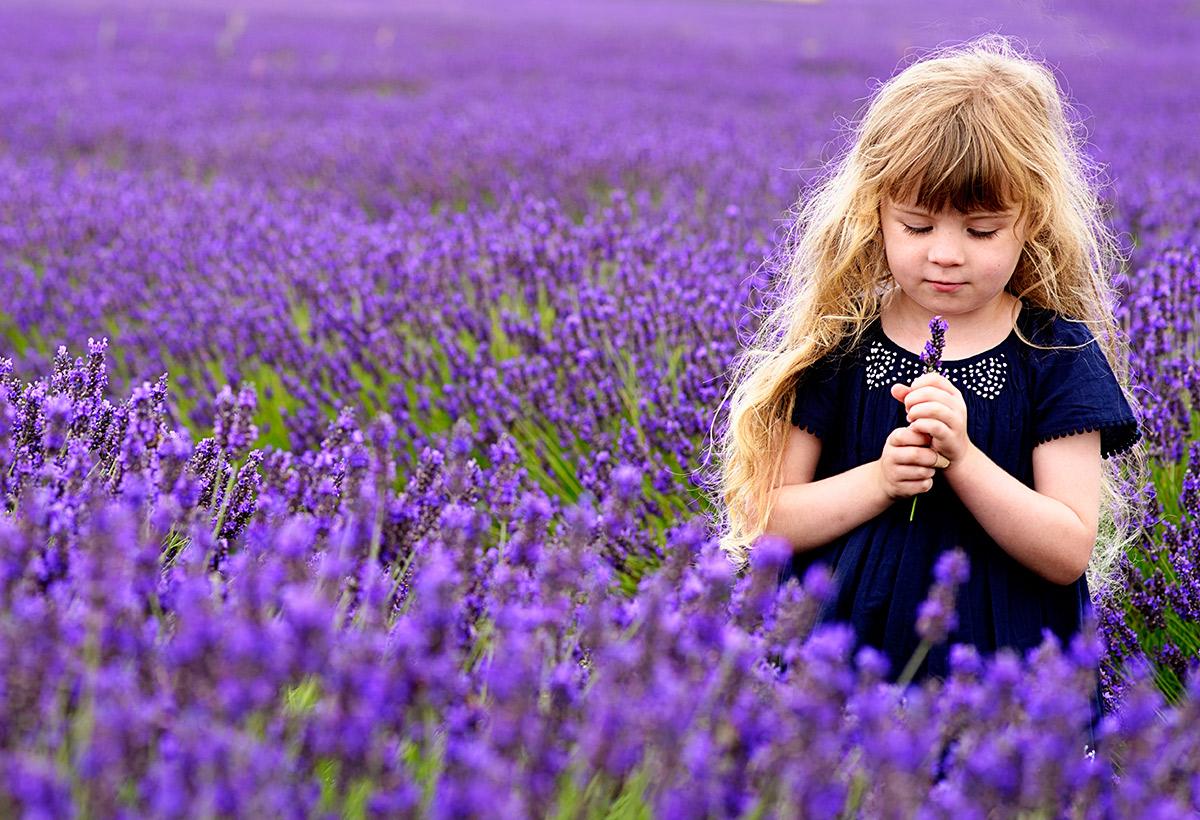lavenderfields_15_t