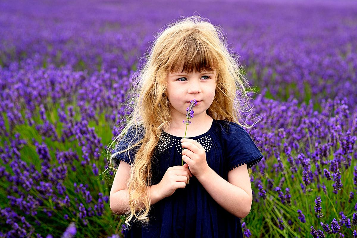 lavenderfields_15_u