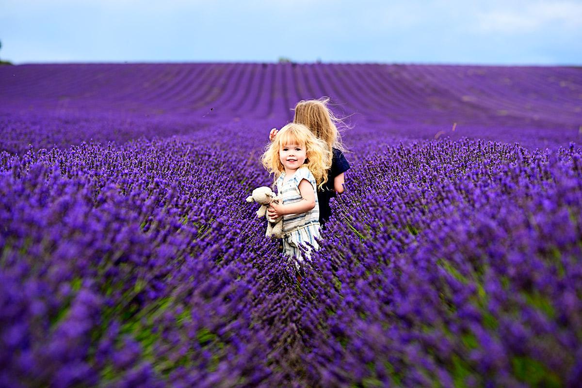 lavenderfields_15_za