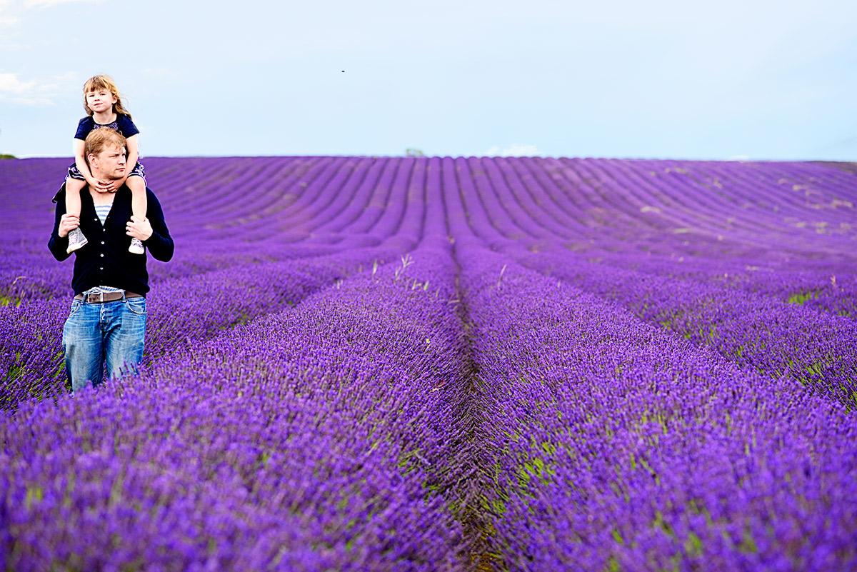 lavenderfields_15_zb