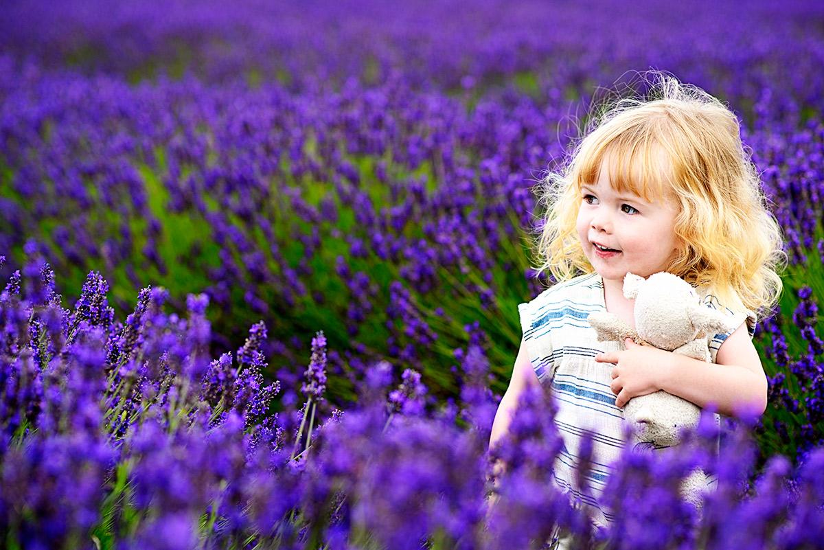 lavenderfields_15_zf